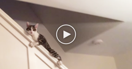 Cat Climbs On The Railing, Then Does The CRAZIEST Thing Ever… OMG, How Does That Happen??