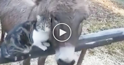 Cat Greets An Old Friend He Hasn't Seen For Awhile, But It's the Sweetest Thing Ever…You Gotta See It