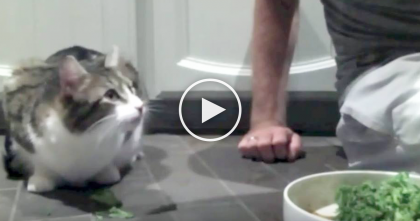 Cat Notices His Human Eating Kale, But Just Can't Resist The Urge… Just Watch, This Is SOO Funny!