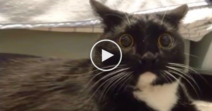 Cat Reacts To Human Singing Mulan Song… Now I Can't Stop Laughing, This Is TOO Funny!!!
