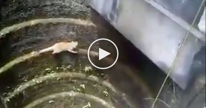 Cat Attempts To Climb Out Of Pit, But Then My Heart Dropped, I Can't Believe What He Does Next…