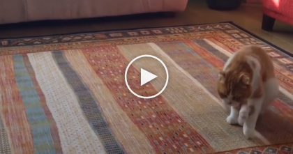 Funny Cat Has A New Way of Moving Around The House, It's Hilarious… LOL, Just Watch!