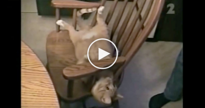 He Gives A Command To The Cat, But Keep Your Eyes On The Chair…How Can Kitty Do It?! OMG