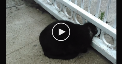 He Noticed A Strangled Cat, His Head Stuck In The Fence. Now Keep Watching, See What He Does…