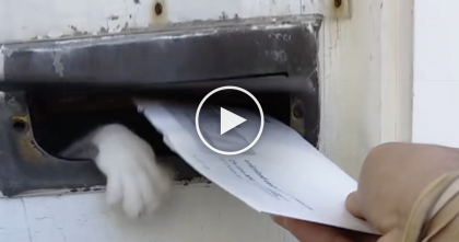 He Tries To Deliver The Mail, But Then…Oh My Goodness, Watch What The Cat Does Every Time!