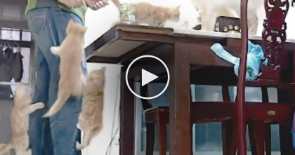 Kittens Smell Something Delicious, But Watch The Shortcut They Take To Find It… SOO Cute, omg!!