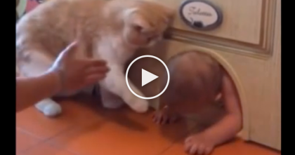 Kitty Guard Watches The Baby, But When He Tries To Come Out….Keep Watching, TOO Funny!