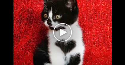 Kitty Has Something Very Special On Her Chest; When You See What It Is?? It's The SWEETEST.