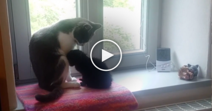 They Introduced An Abandoned Kitten To This Cat, Now Watch What Happens When They Meet…