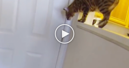 Kitty Starts Meowing Like Crazy, But Watch To See The Reason Why… WOW, He LOVES This!!