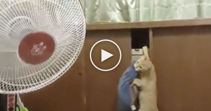 Kitty Tries To Bring His Pillow To Sleep With… Now Watch What Happens Instead, LOL