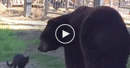 Kitty Walked Into A Zoo, But Just Keep Watching… Who He Befriends Is Shocking Everyone, WOW.