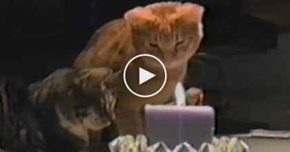 She Tries To Light A Candle, But When The Cat Notices It… THIS Happens Every Time, LOL!!