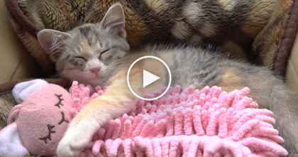 They Gave This Kitten A Pink Fluffy Toy, Now Watch What Happens… SOO Cute, I Can Hardly Handle It!