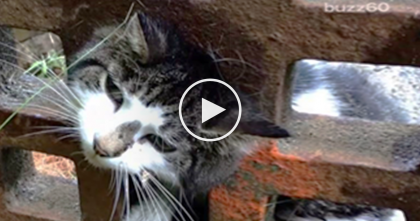 They Saw A Cat's Head Trapped In A Grate, But Then They Noticed She Was Barely Breathing…OMG!