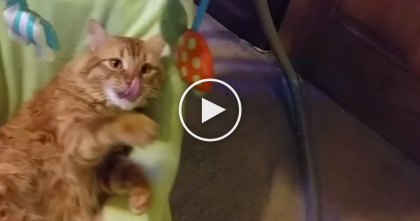 They Walked Into The Room, But Where They Found This Cat Is Hilarious, Just Watch! LOL…