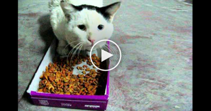 They're Feeding This Hungry Street Cat Some Food, Now Listen To How The Cat Responds…