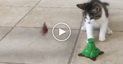 WATCH: Kitten Looks Like He's Dancing, But It's Because Of Something Very Unusual… OMG.