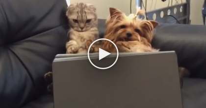 WATCH: When This Cat And Dog Get Bored, You've Gotta See What They Do… Oh My GOODNESS.