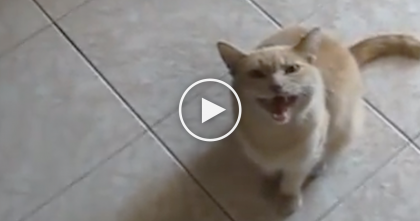 Weird Meowing Cat is NOTHING Like You've Ever Heard…Just Listen!! OMG, What In The World?!