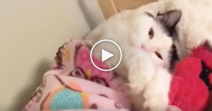When Kitty Gets Tired, You've Gotta See Where He Sleeps… Awwww, What An ADORABLE Idea!