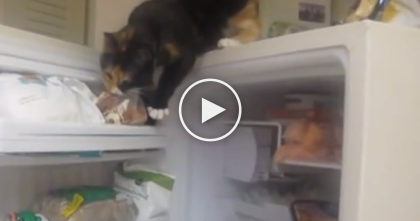 They Discovered What This Kitty Thief Was Doing, But Nobody Could Believe It… Oh My GOODNESS.
