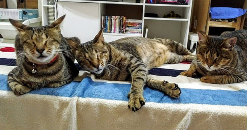 People Ignored Three Blind Cats, They Weren't Adopted-4