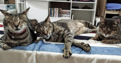 People Ignored Three Blind Cats, They Weren't Adopted, But Then… The SWEETEST Thing Happened!