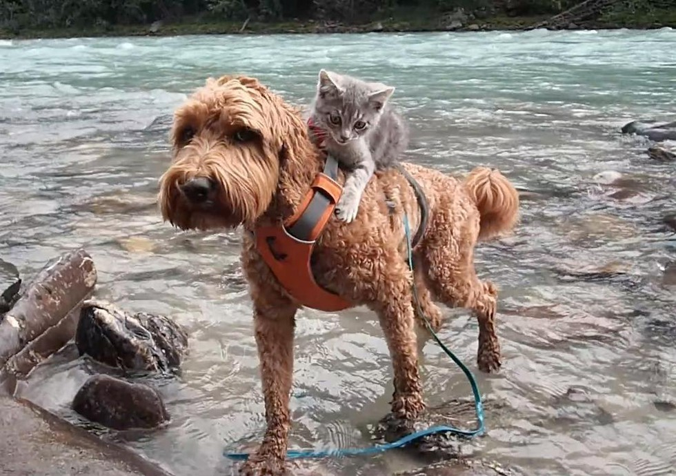 abandoned-kitten-was-rescued-but-now-see-what-he-does-with-his-new-best-friend-adorable-2