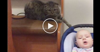 Baby Won't Stop Crying, Now Watch What This Kitty Is Doing… This Is SOO Sweet, Awwww!!