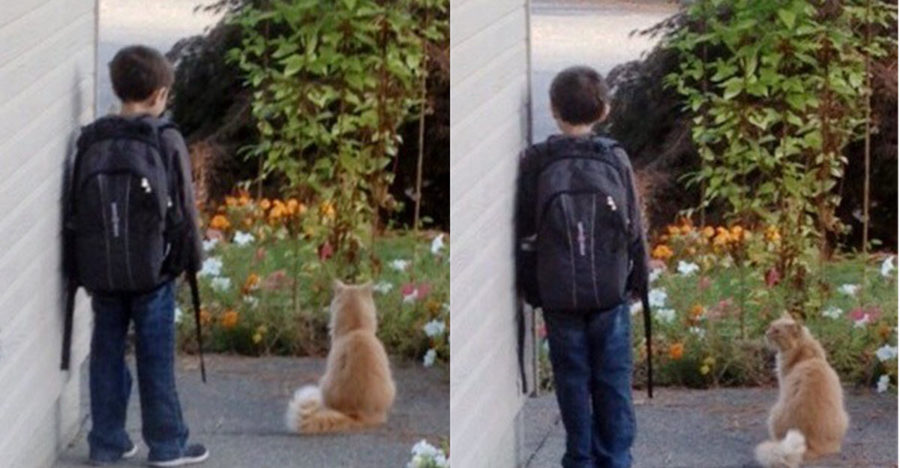 boy-waits-every-day-for-the-school-bus-but-when-you-see-what-the-cat-does-your-heart-will-melt-1