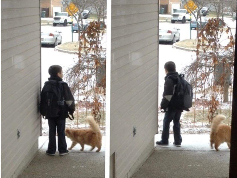 boy-waits-every-day-for-the-school-bus-but-when-you-see-what-the-cat-does-your-heart-will-melt-2