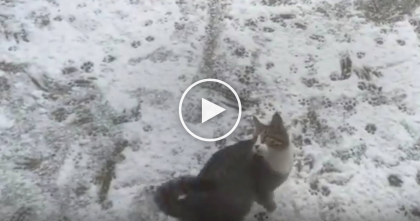 Cat Discovers Snow For The First Time, But When You See What He Does With The Snow…Hilarious!!