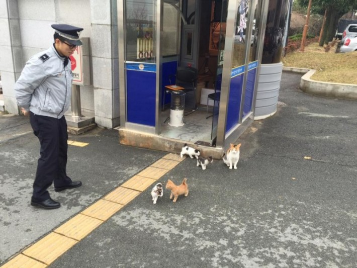 cat-goes-to-police-asking-for-help-but-you-wont-believe-the-surprise-they-got-next-1