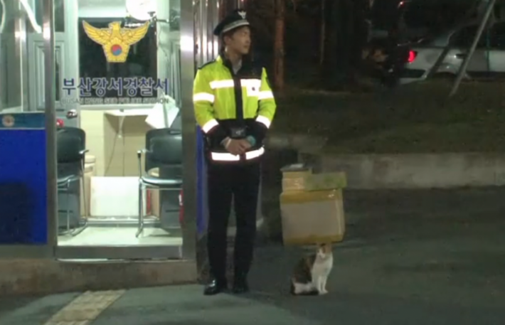 cat-goes-to-police-asking-for-help-but-you-wont-believe-the-surprise-they-got-next-3
