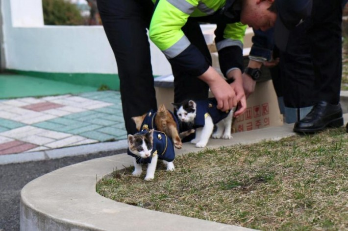 cat-goes-to-police-asking-for-help-but-you-wont-believe-the-surprise-they-got-next-4