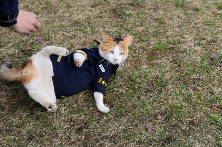 cat-goes-to-police-asking-for-help-but-you-wont-believe-the-surprise-they-got-next-5