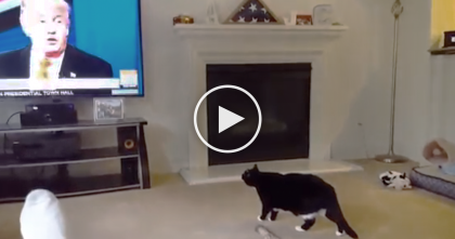 Cat Sees Trump On TV For The First Time…Just Watch His Reaction At 0:10, I CAN'T Stop Laughing…