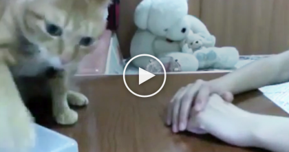 Cat Tries Opening Box Of Treats, But Then… Turn Up Your Volume, I Didn't Expect What Came Next, LOL!!