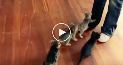 Her Kittens Are Meowing For Attention, So When She Walks Away? Now Watch What They Do, OMG!