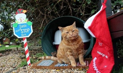 Cemetery Cat Named Barney Who Has Comforted Mourners For Over 20 Years Has Died, But now…