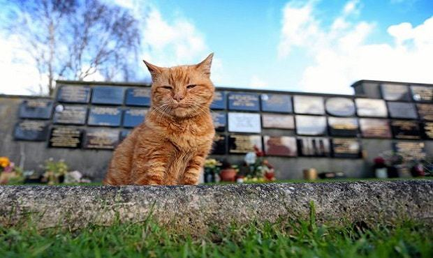cemetery-cat-named-barney-who-has-comforted-mourners-for-over-20-years-has-died-but-now-3