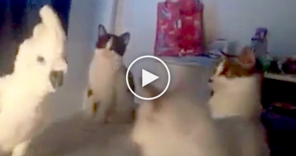 Copy-Cat Parrot Walks Up To A Group Of Kittens, But Then… NOBODY Expected This Reaction!