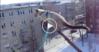 Dare Devil Kitty Goes For A Walk, But Watch Where He Goes… My Heart STOPPED, Kitty Has NO Fear!!