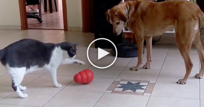Doggie Wants A Treat, But Watch What This Smart Kitty Does… He Knows JUST What To Do…