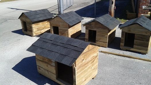 feral-cat-houses-1