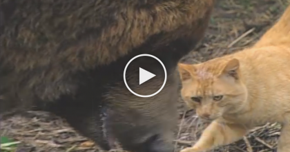 Freight-train Killed His Mom, But When This Stray Ginger Cat Noticed… The Results Are AMAZING…