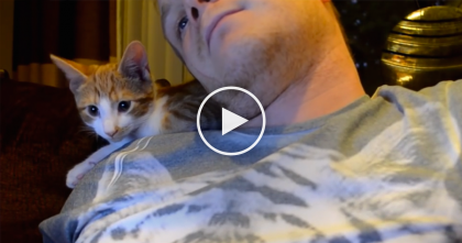 He Adopted This Kitten, But Then… Just Watch Them Together Now, It's SOO Adorable, Awwww!