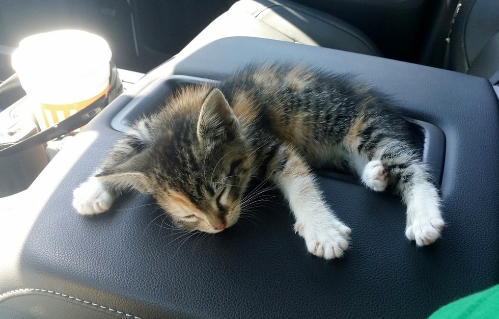 he-found-this-homeless-kitten-in-the-middle-of-the-road-what-happens-next-soo-cute-2