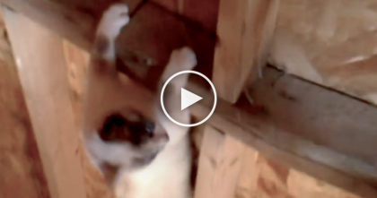 He Tried To Rescue His Cat Stuck In The Rafters, But Then… Watch What This Cat Does, OMG!!